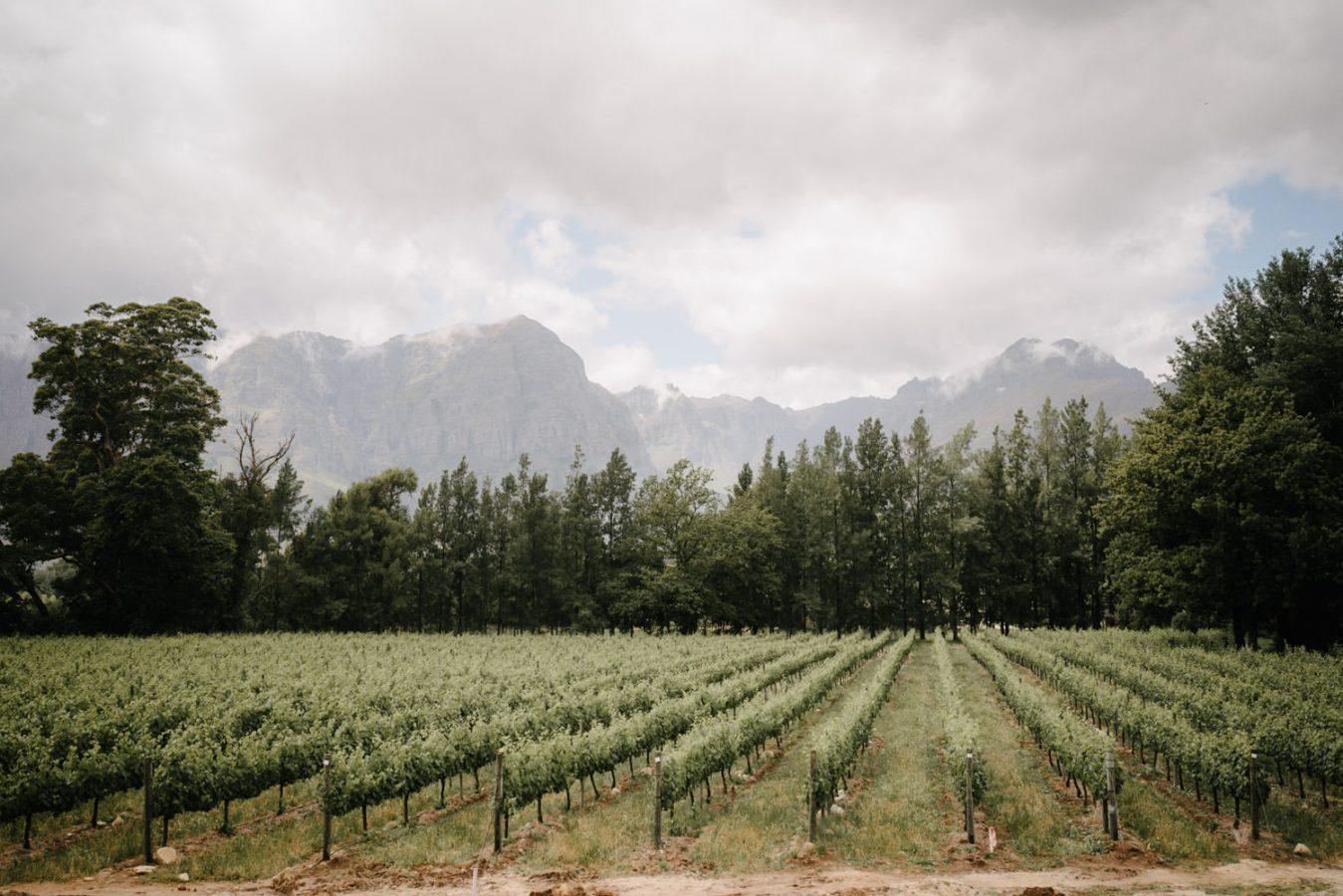Zuid Afrika trouwfotograaf wijngaard